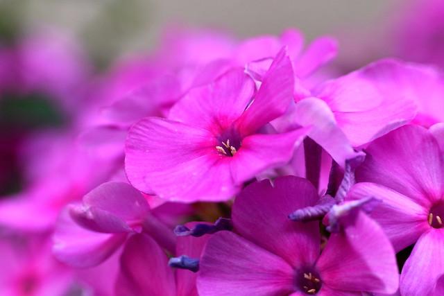 Emporium of Much Pink