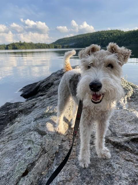 Terrier on Tiny Island