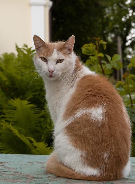 Monastic cat