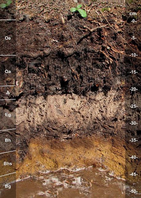 Berryland soil series