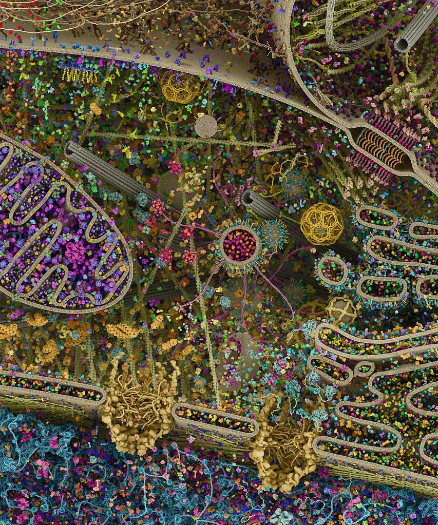 Molecular Landscapes