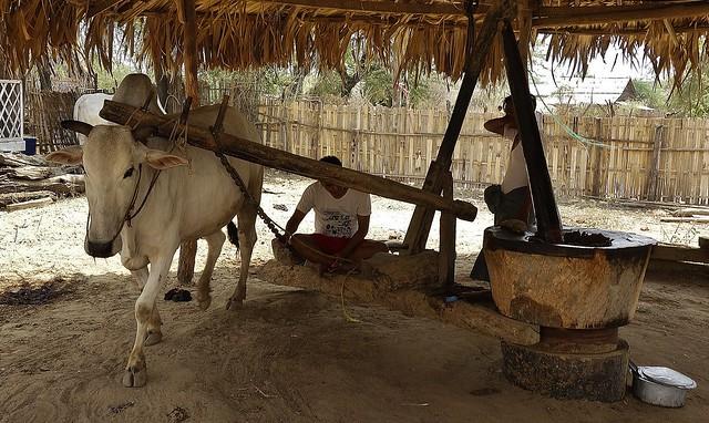 MYANMAR, Burma- Besuch im Dorf Minnanthu In der archäologischen Zone rund um Alt-Bagan, Dorfmühle ,   78456/13973