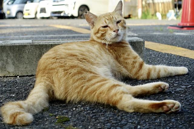 Today's Cat@2021−08−27