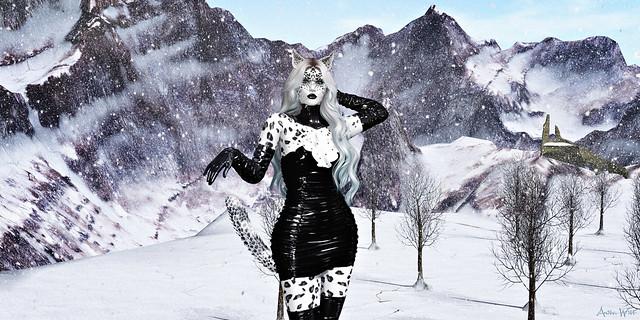Snow Leopard in Black