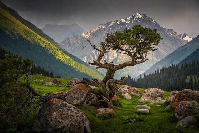 Altyn-Arashan