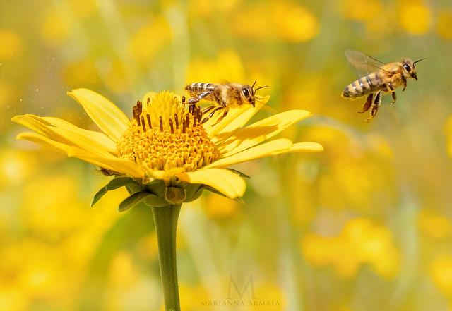glorious pollinators
