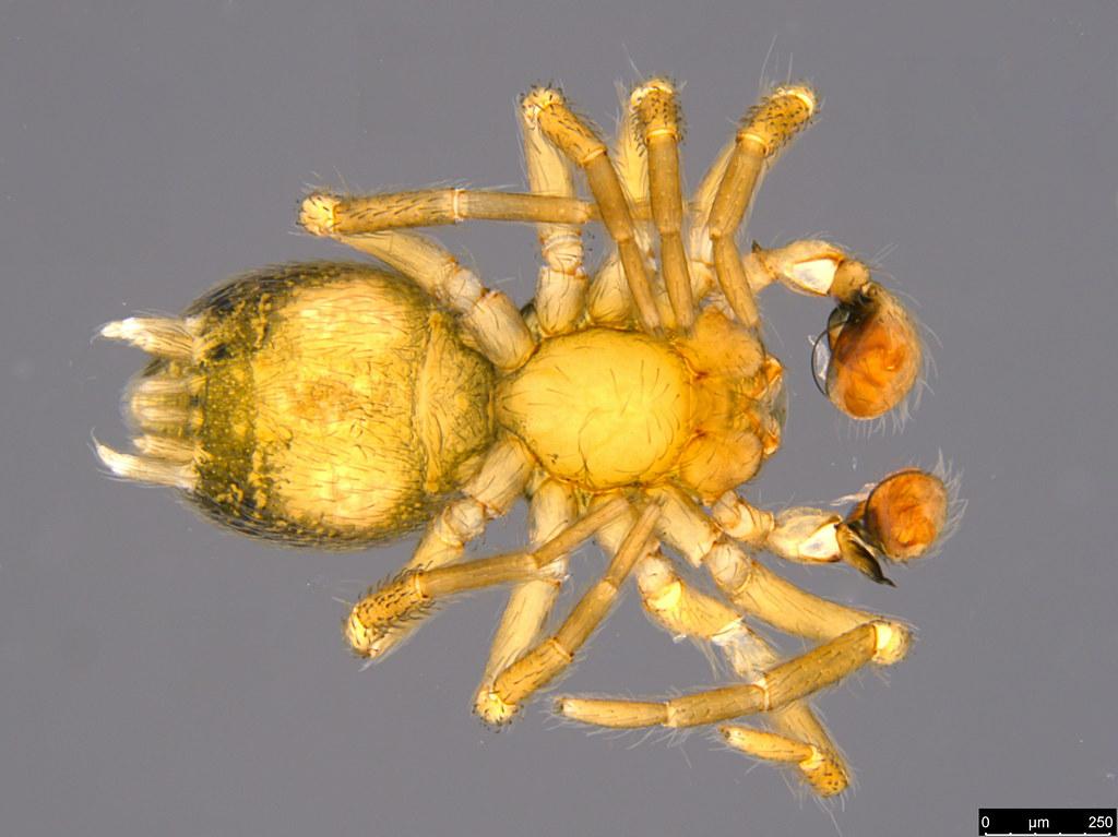 2b - Araneae sp.