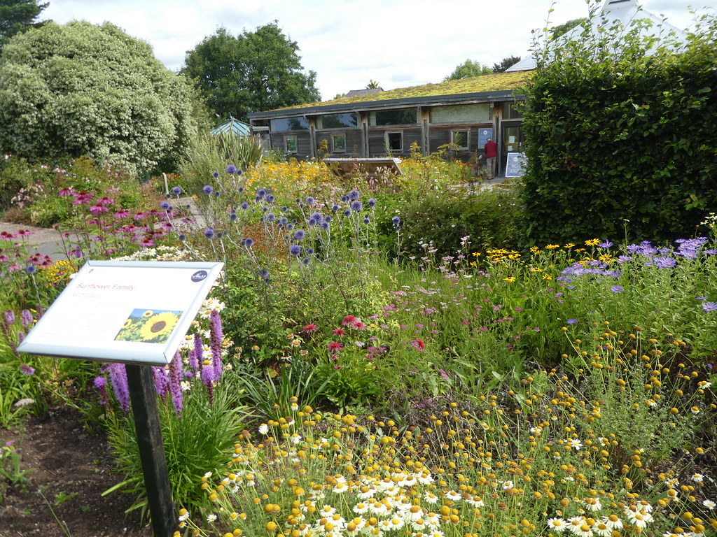 Sunflower Garden, Ness Botanic Garden, Cheshire