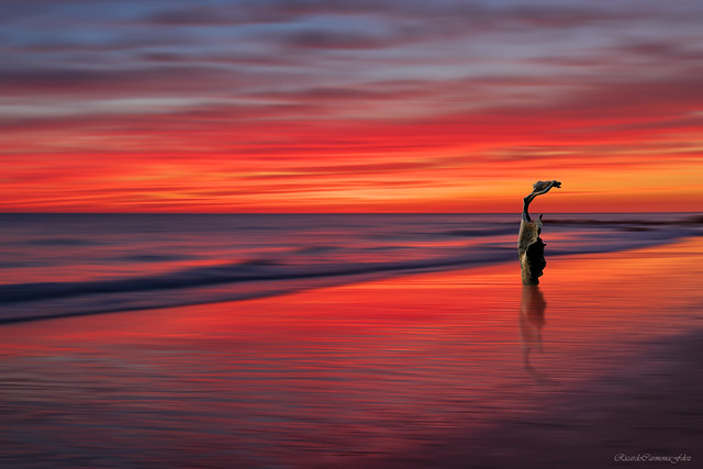 The sunset wind  -  El viento del atardecer