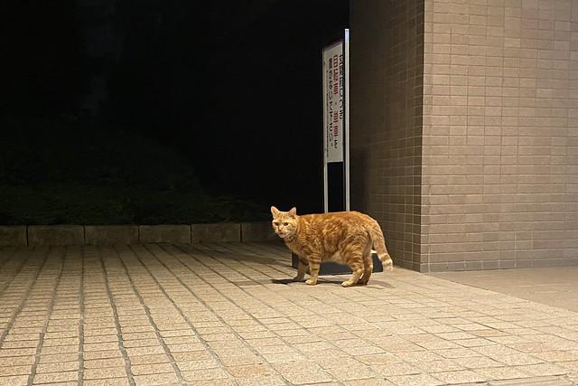 Today's Cat@2021−08−28