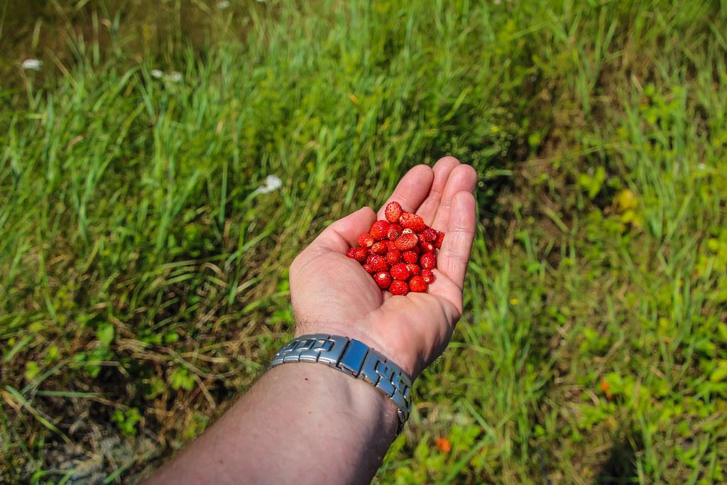 2012  24-26-31 July Sortavala-120