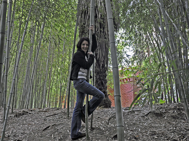 Dancing in Bamboo Forest