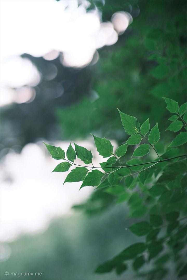 ภาพธรรมชาติ ละลายหลังสวยๆ  เลนส์ Kamlan 50mm f1.1 กล้อง Fujifilm X-E4