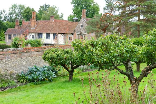 Apple orchard at Ightham Mote..NT Kent