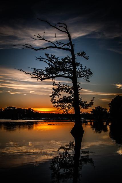 Cypress Tree Sunset