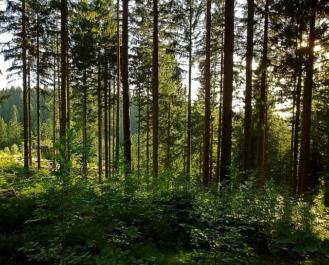 Waldspaziergang - Forest walk