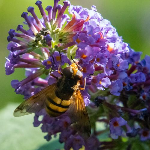 Still flowering, still attracting insects