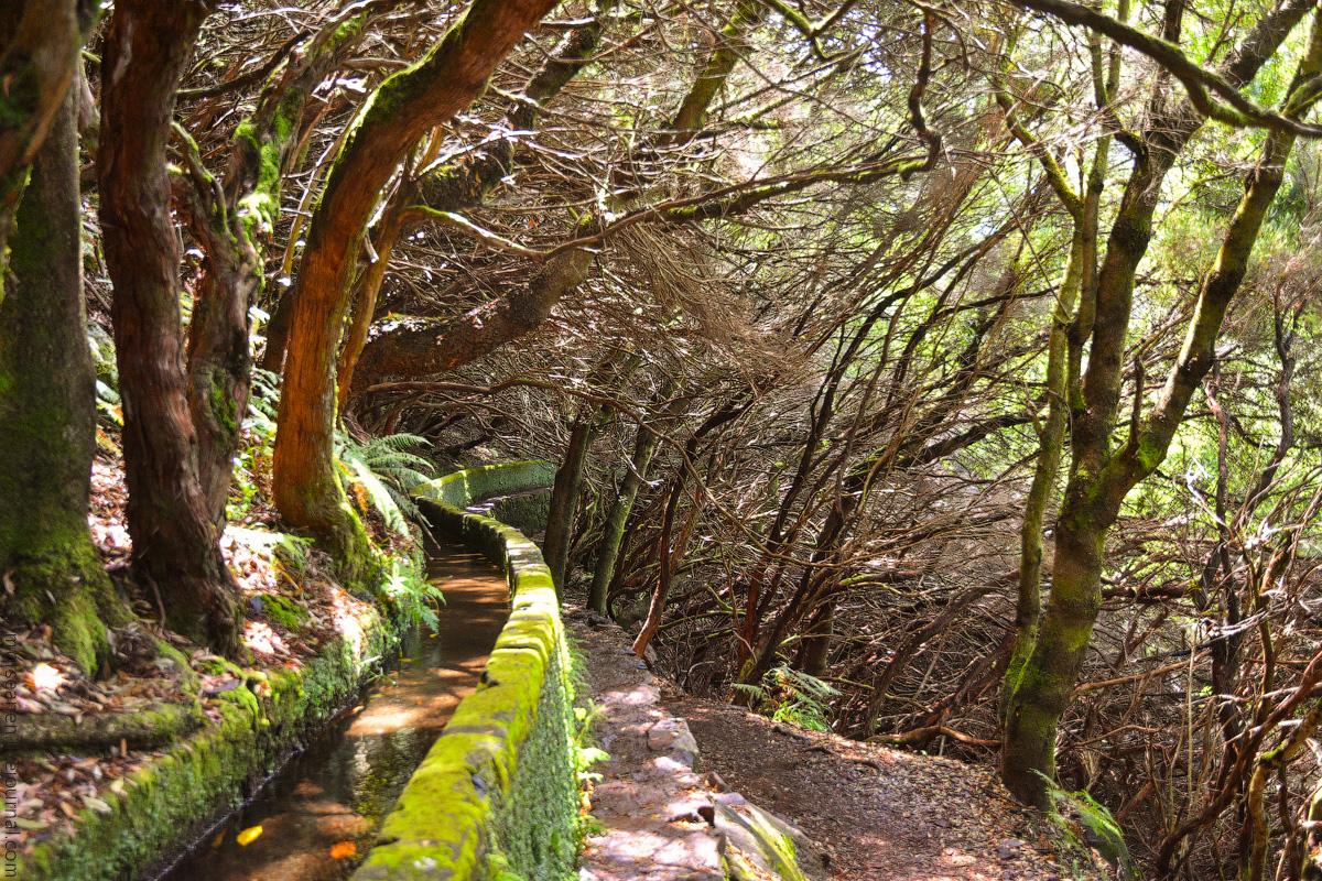 Madeira-Beginning-(33)