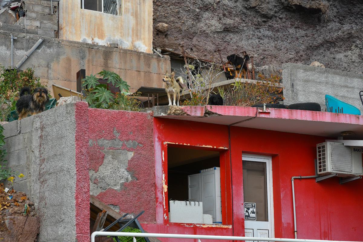 Madeira-Beginning-(28)