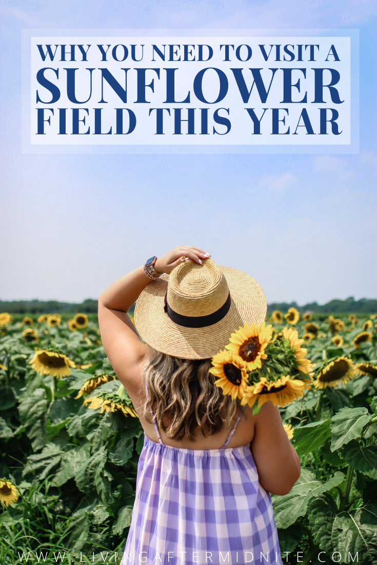 Why you need to visit a Sunflower Field this Year