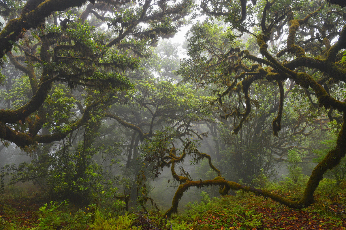 Madeira-Beginning-(44)
