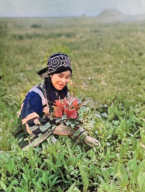 Ainu Woman Gathering Flowers, Hokkaido, Japan, Vintage Japan Daily Life, Japanese, Colorized by Asar Studios