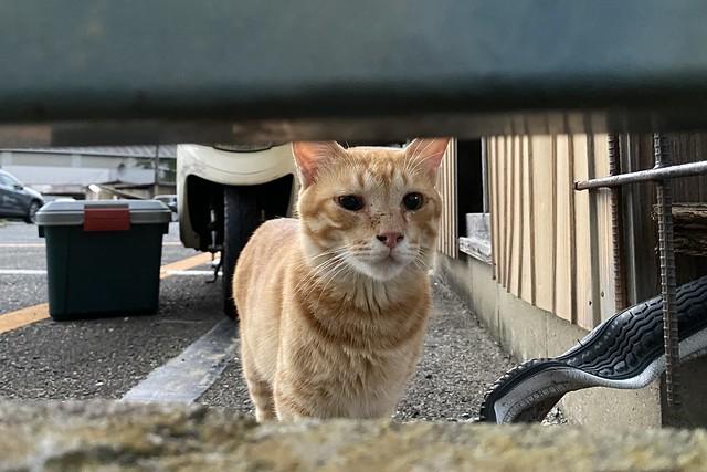 Today's Cat@2021−08−30