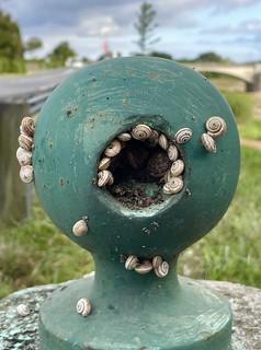 Une collection de petits escargots