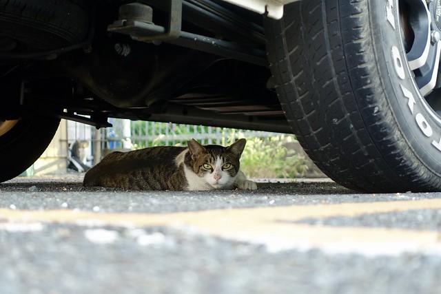 Today's Cat@2021−08−31
