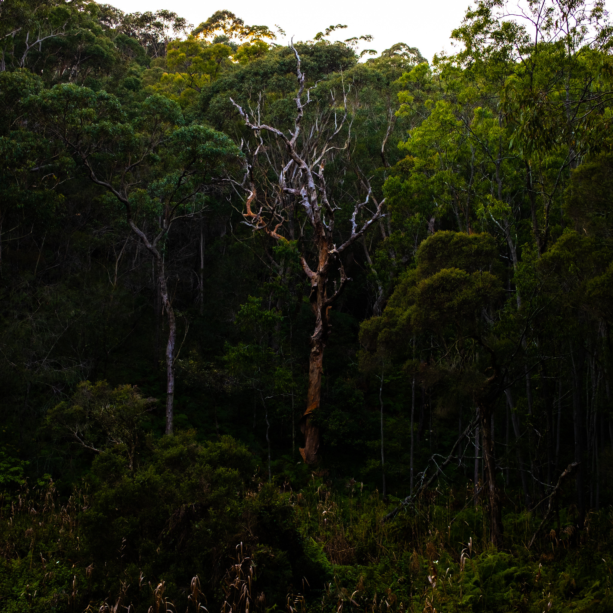 The Glen Reserve