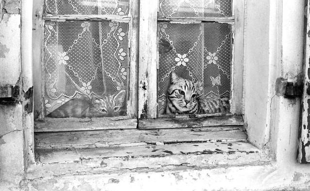 Immobiles à la fenêtre