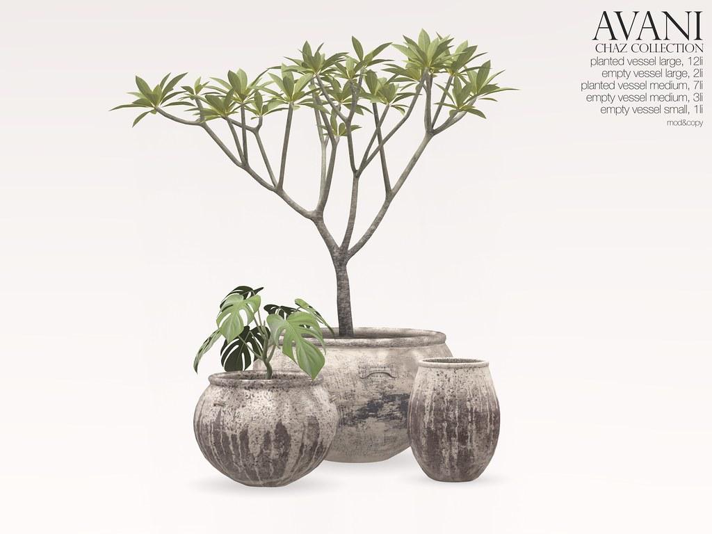 Avani Chaz Collection