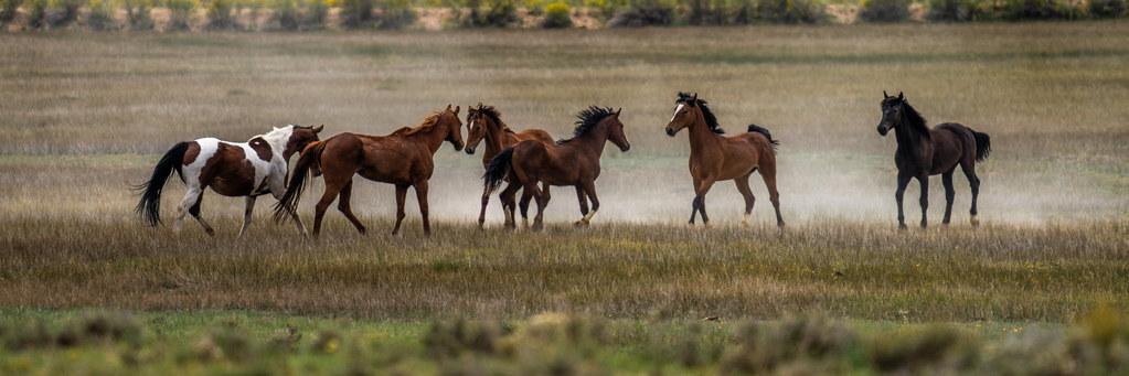 Wild Horses Bryce Canyon National Park Fuji Sony A7R IV 200-600mm Gmaster Zoom Lens Fine Art Wildlife Landscape Nature Photography Utah Southwest! Elliot McGucken Master American West Photography dx4/dt=ic Fine Art!