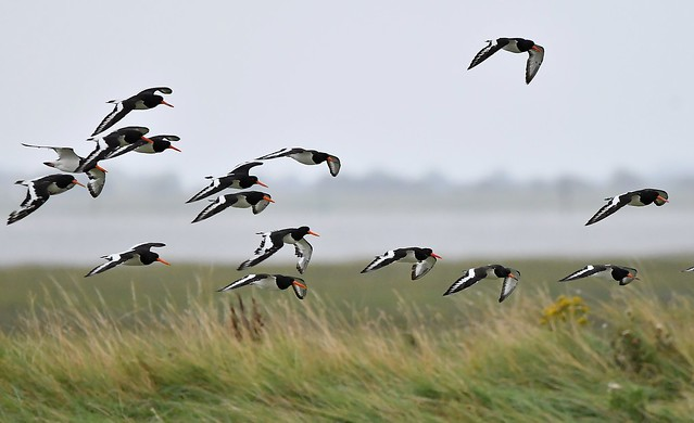 Freiston Shore RSPB nature reserve near Lincolnshire.
