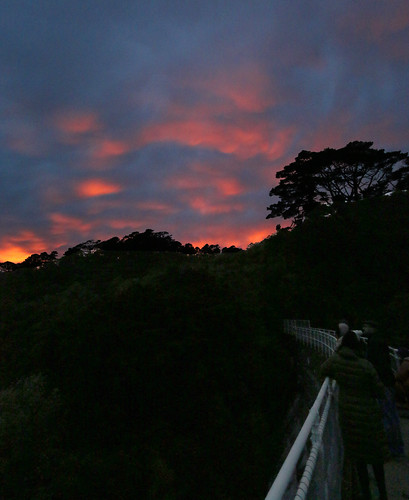 <p>Sunrise from the upper reservoir at Zealandia on a Dawn Tour.<br /> Amazing<br /> <br /> 52 Weeks Challenge: 32. Natural Light</p>
