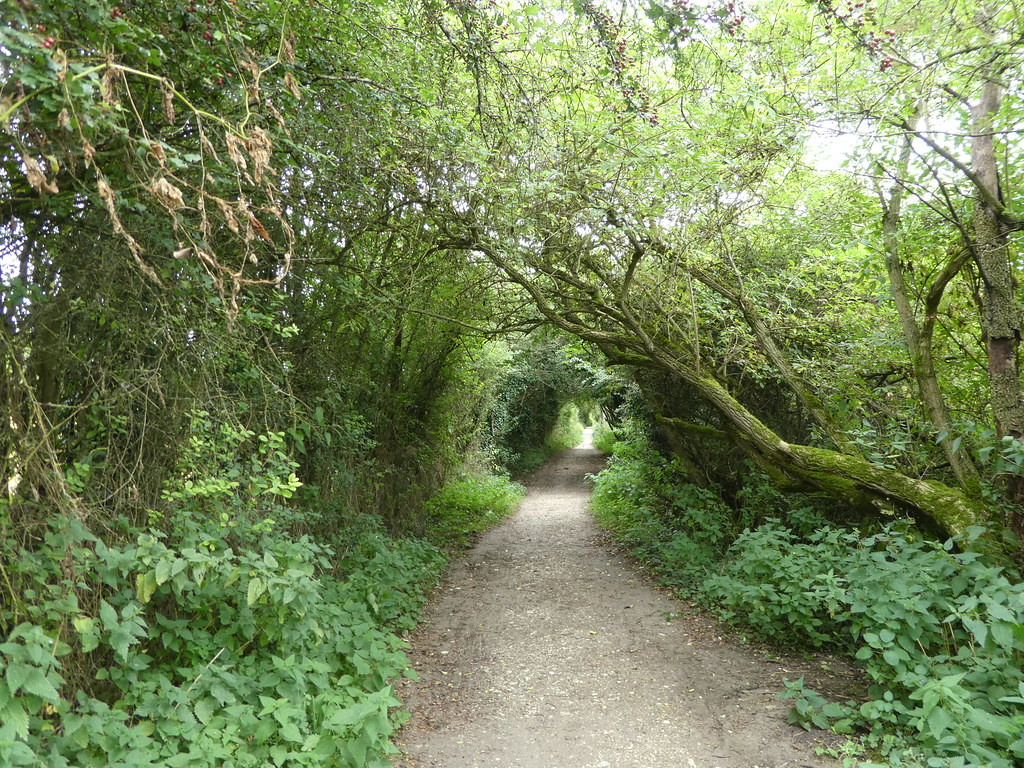 The Speen Moors walk through woodland