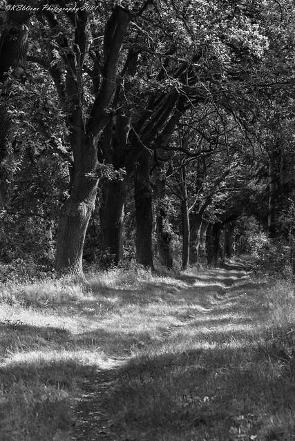 ... cooling forest trial  / kühlender Waldpfad / 01020 ...
