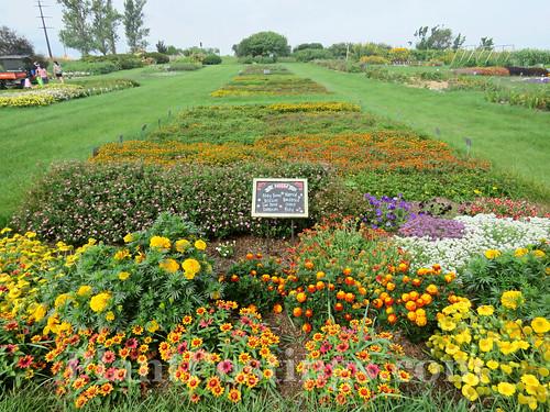 Display Gardens 1