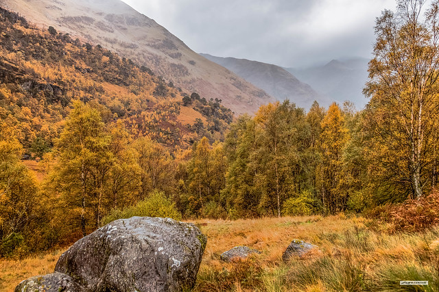Despite low cloud Glen Nevis displays its Autumn garb to great effect, Lochaber, Inverness-shire, Scotland.