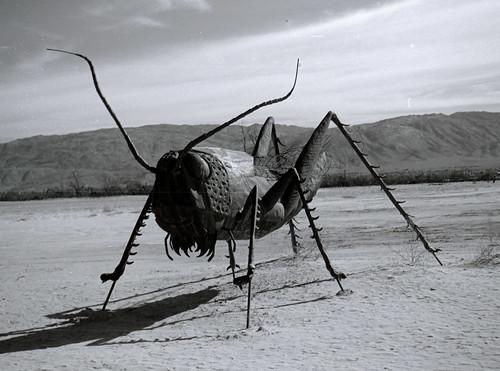 Grasshopper at Galleta Meadows (1)