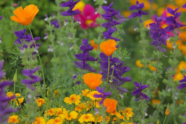 Ightham Mote Colourful Flora (NT)..