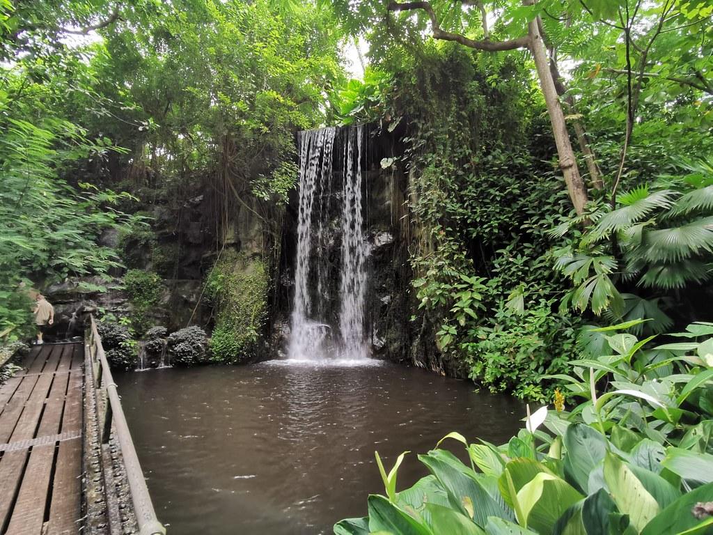 Indoor: Tropischer Regenwald in Burgers' Bush bei Arnheim. Phyllodendren und andere Pflanzen wuchern neben einem künstlichen Wasserfall.