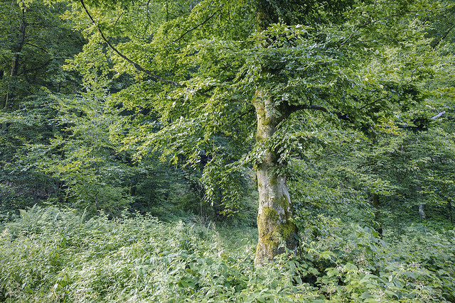 Beeches, nettles, and brambles