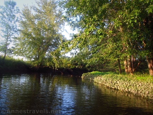 Evening on Black Creek - note how high the water was at one point by the mud on the leaves.  Rochester, New York