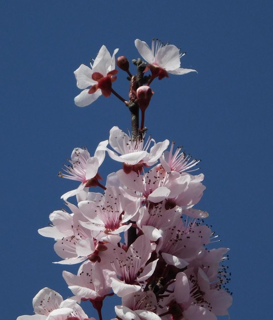 Tree in Flower