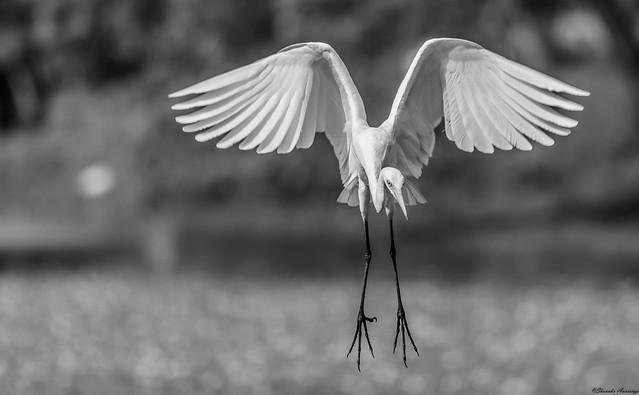 Swift Flight and stable flying ensure easy landing.