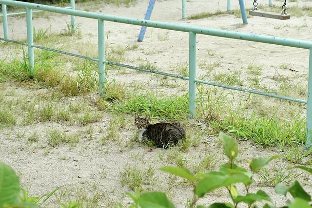 Today's Cat@2021−09−01