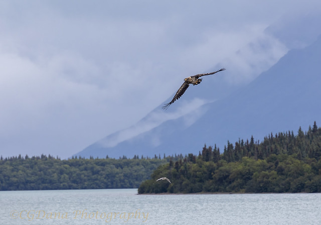 Katmai National Park, mouth of Brooks River, AK