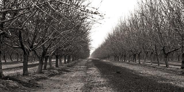 Orchard. California, USA.
