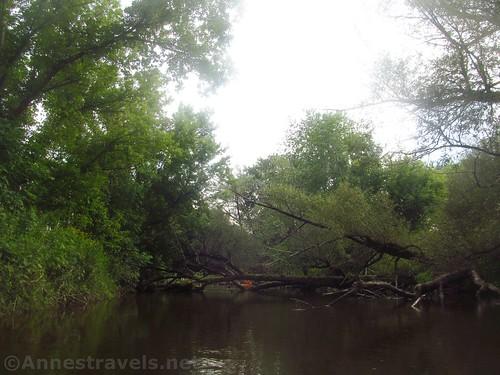 Another minor log jam on Black Creek, Rochester, New York